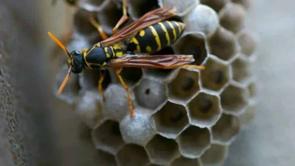 How to Prevent Animals & Insects from Nesting in Grills